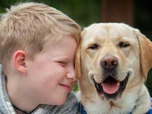 Man's best friend a lifeline for many