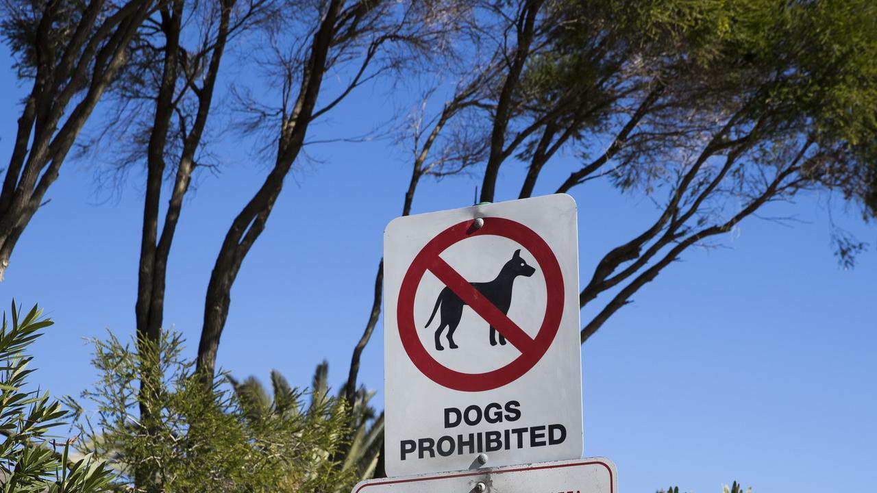 Dog Palm Beach