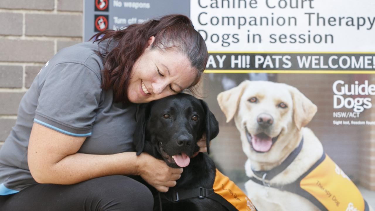 She's the tail-wagging, four-legged friend helping people go through court. Now, Guide Dog China is being used as a face for the Canine Court Companion Program. See her journey. Picture: Tim Pascoe