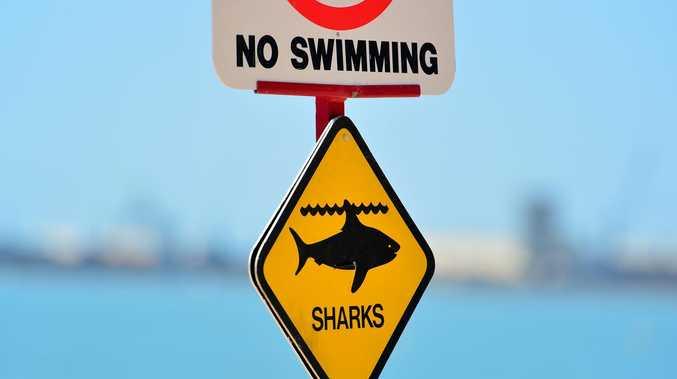 Multiple sharks sighted at popular CQ beach
