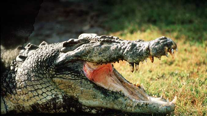 'ABSOLUTE CROC': Man skins croc at Airlie motel, eats flesh