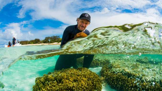 The big danger facing local coral reefs