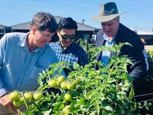 Fast food spoiling bottom line for region's growers