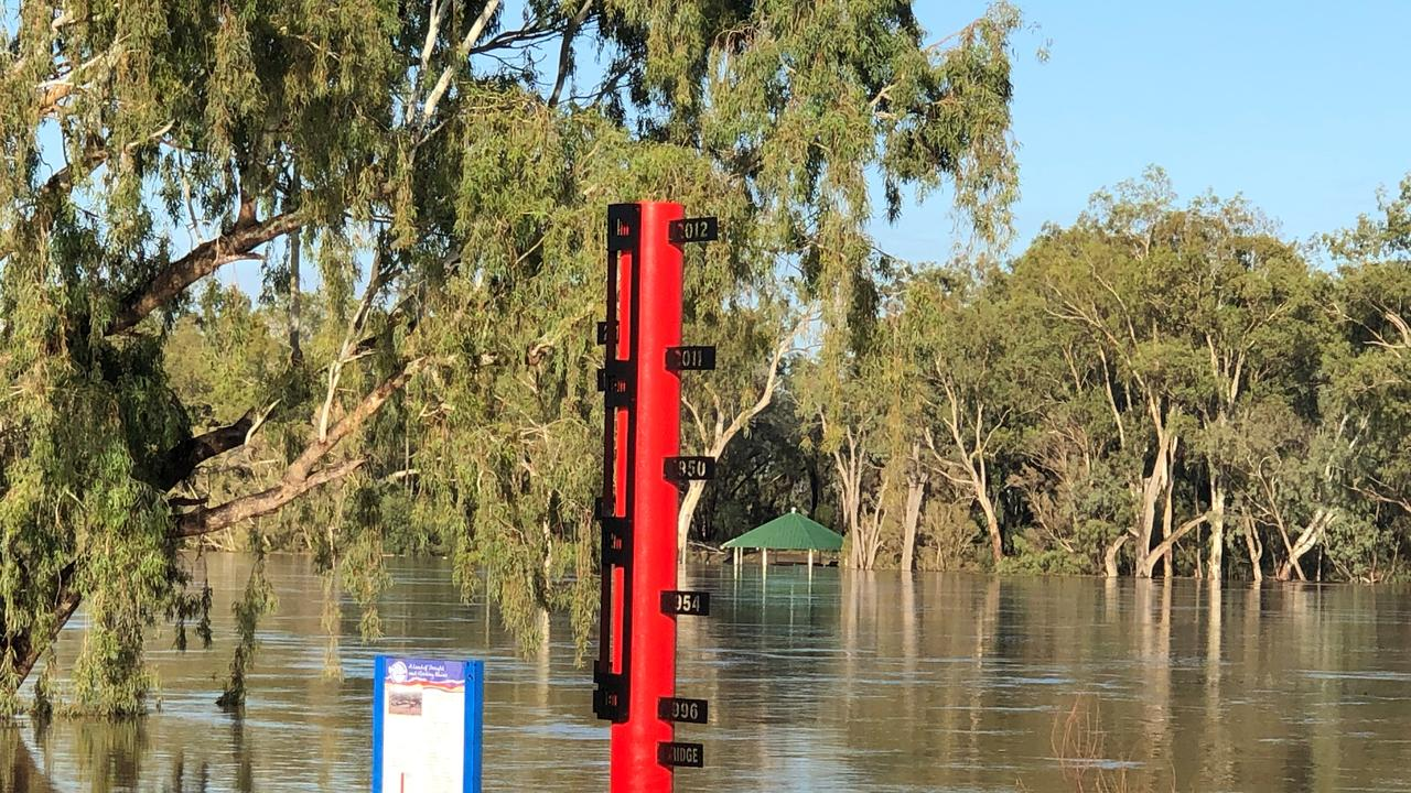 The rising Balonne River at 7am this morning. Picture: Andrew Schurmann