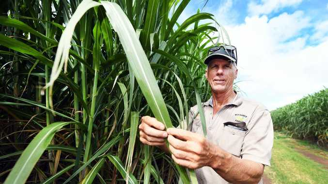 BIG DIFFERENCE: Heavy rain brings relief for cane farmers