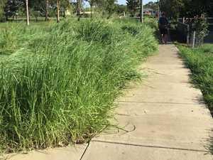 Snake zone: Town's overgrown footpaths left unkept
