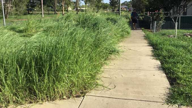 Snake zone: Town's overgrown footpaths left unkept