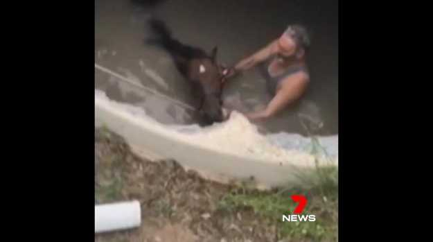 WATCH: Horse's scary ordeal in the Mary Valley