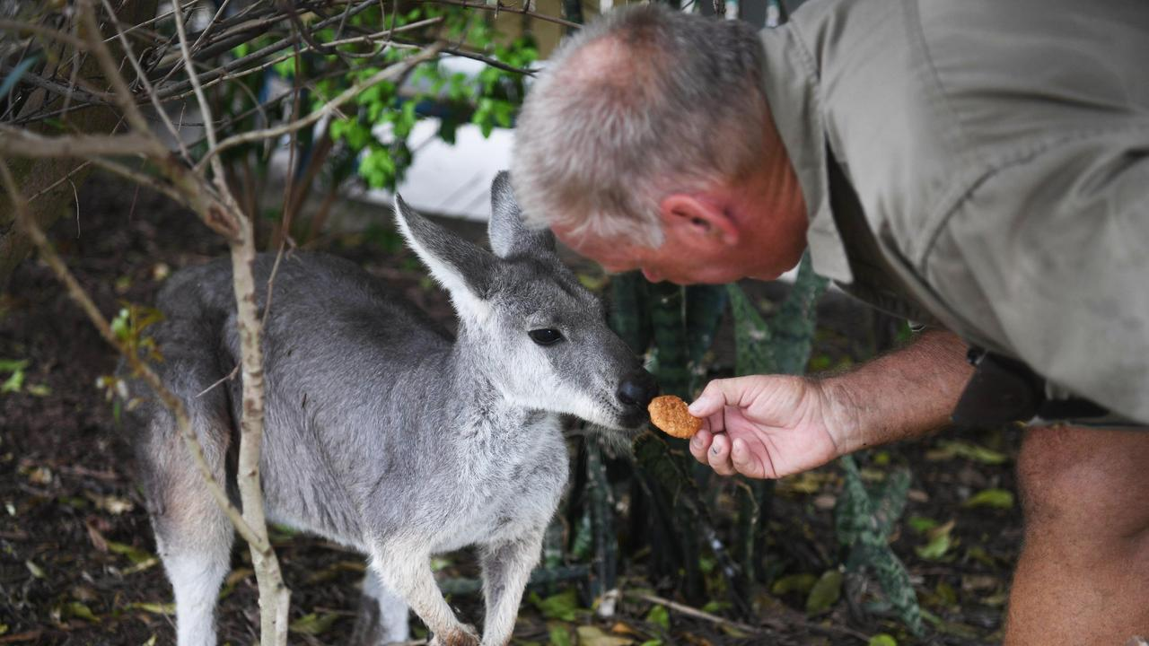 WIRES Northern Rivers warn people not to feed human food to wild animals.