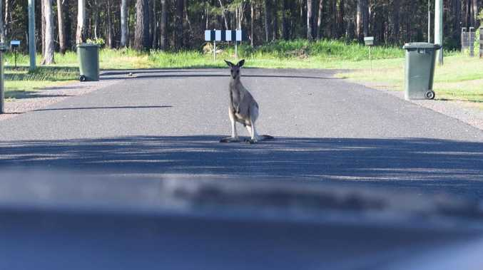 Drivers warned to watch out for animals on Coast roads