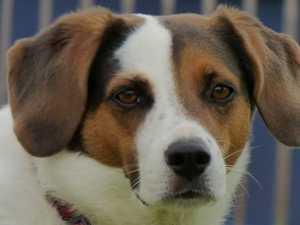 101 Bundaberg dogs