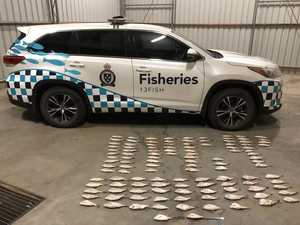 Fisheries officers bag four anglers, 119 snapper and two cars