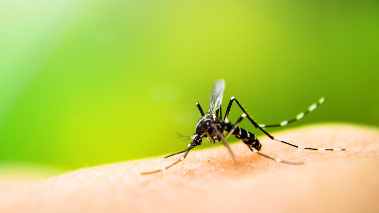 Mosquitoes suck blood from animals, including humans, while also leaving potentially deadly diseases.
