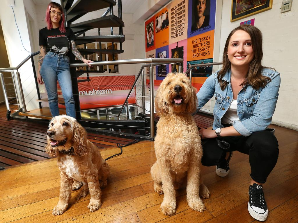 Dogs in the workplace and how they benefit employees and the working environment. Picture: Ian Currie