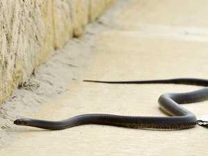 Late night Depot Hill snake bite on the toe