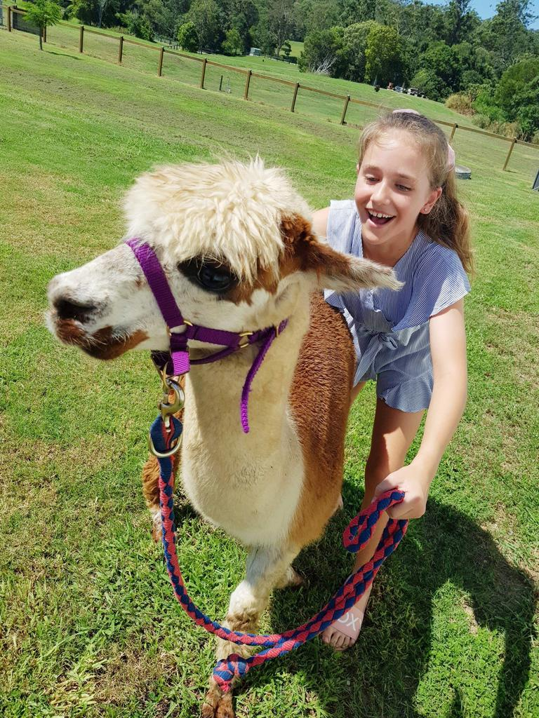 Mountview Alpaca Farm is perfect for a day trip.
