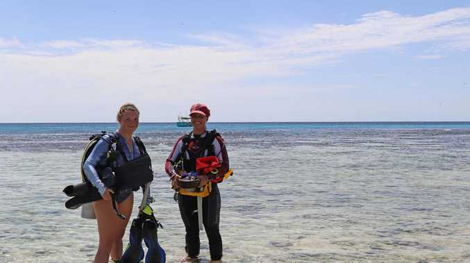Reef-saving research Lady Elliot Island project aims to combat climate change threat