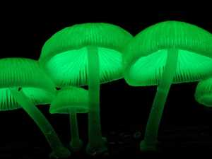 Magical glowing mushrooms popping up everywhere
