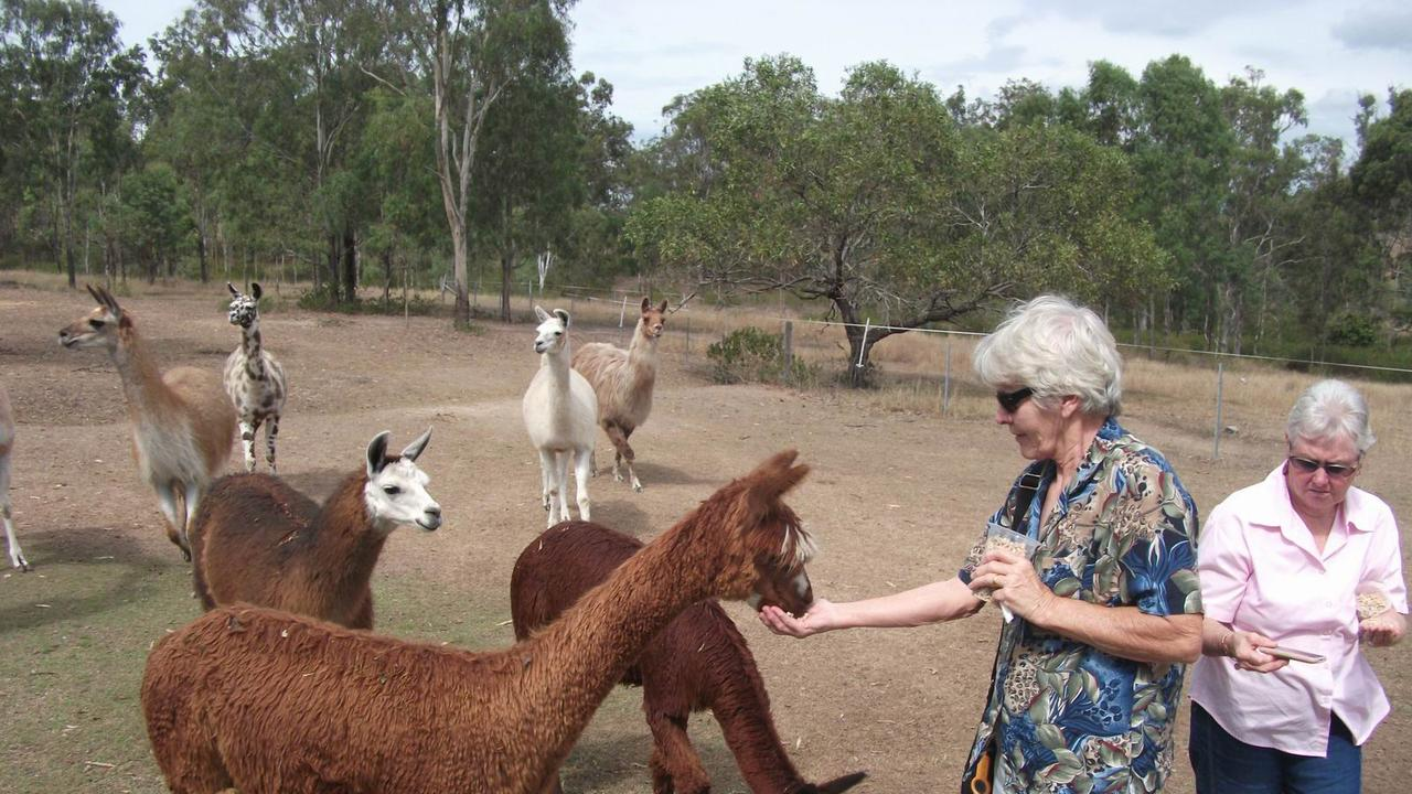 Kathy McGuill (left) and Fay Reid (right) and other members of the Arana Hills and District Senior Citizens Club enjoyed a visit to Ottaba Llamas.