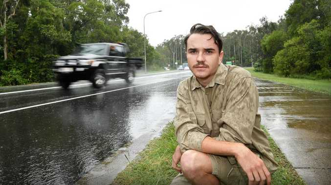 Crushed turtle sparks calls for motorists to watch out