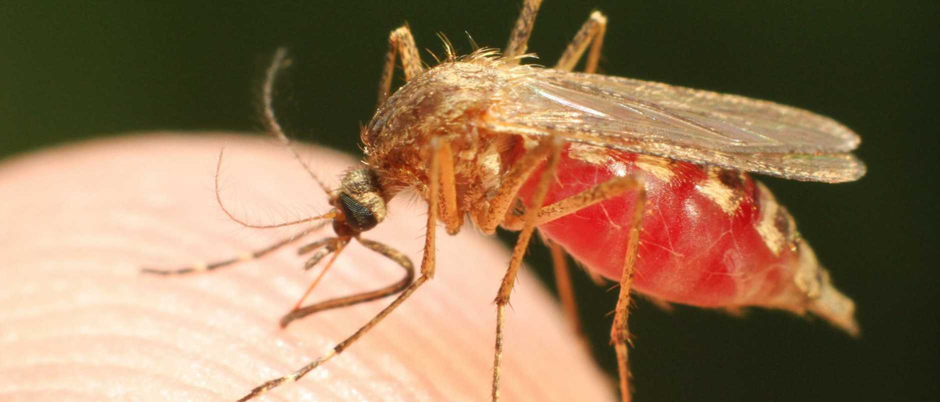 "A young girl has been ""scarred for life"" and Brisbane City Council faces serious claims over a mosquito plague in suburban hot spots."