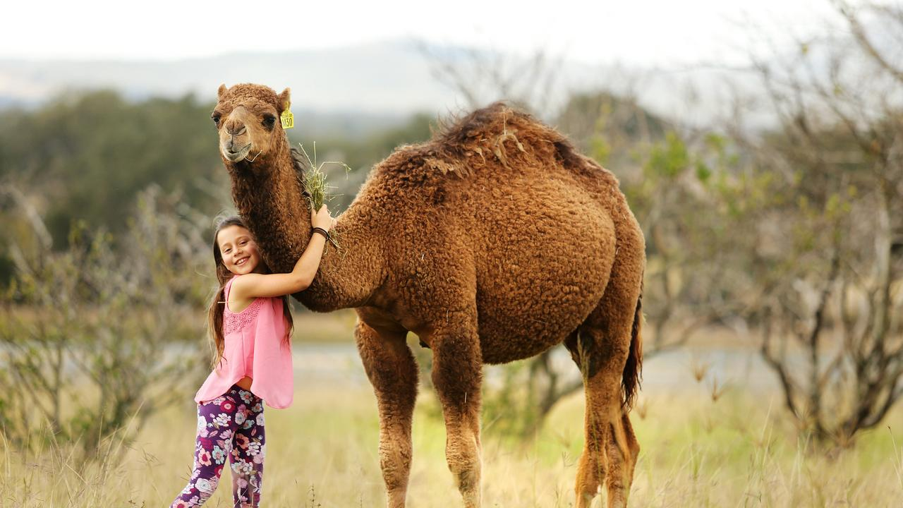 Holly Flood poses with Bodie at Summer Land Camel Farm, Harrisville. Photo: Claudia Baxter.