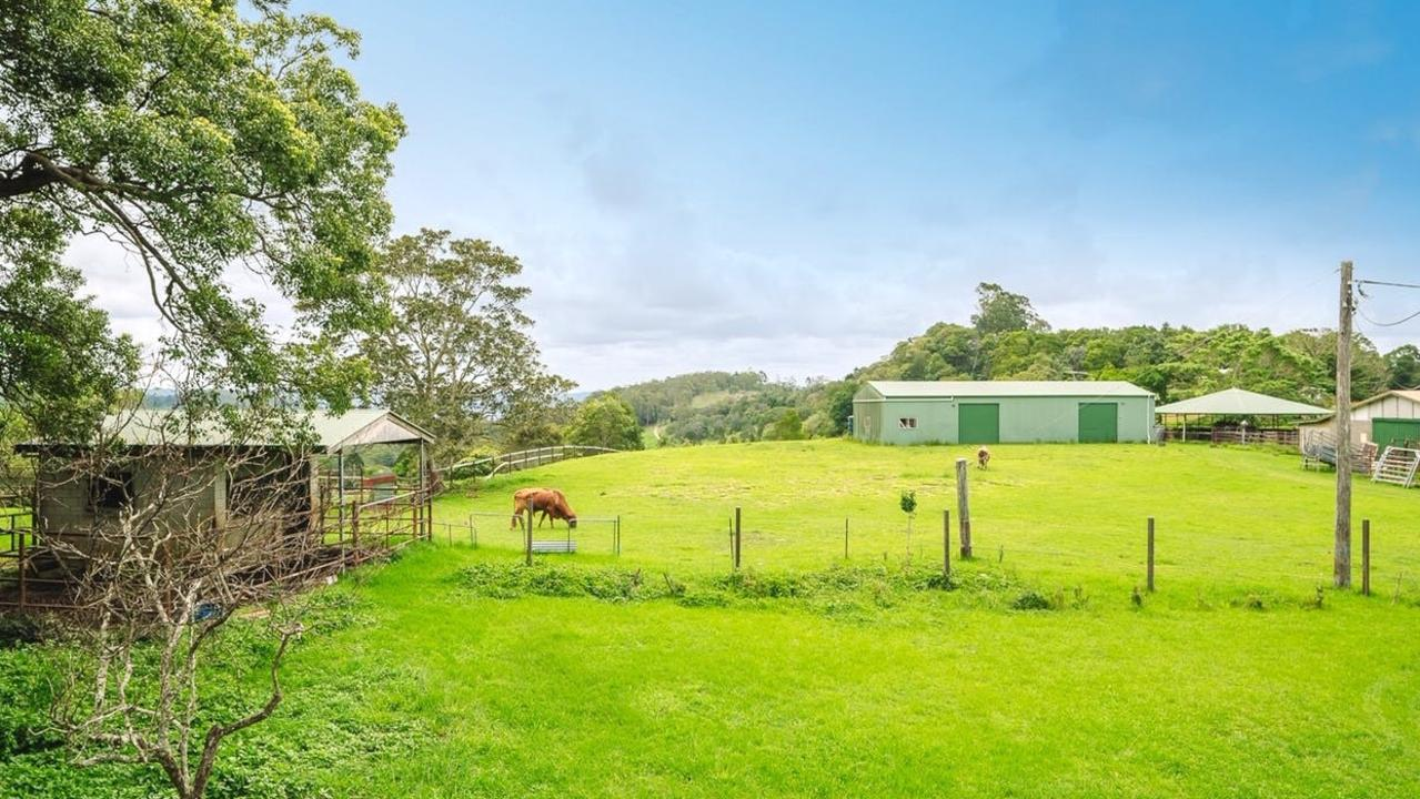 A Maleny property that's been home to dozens of rescued cows is for sale. Photo: Elders Gympie