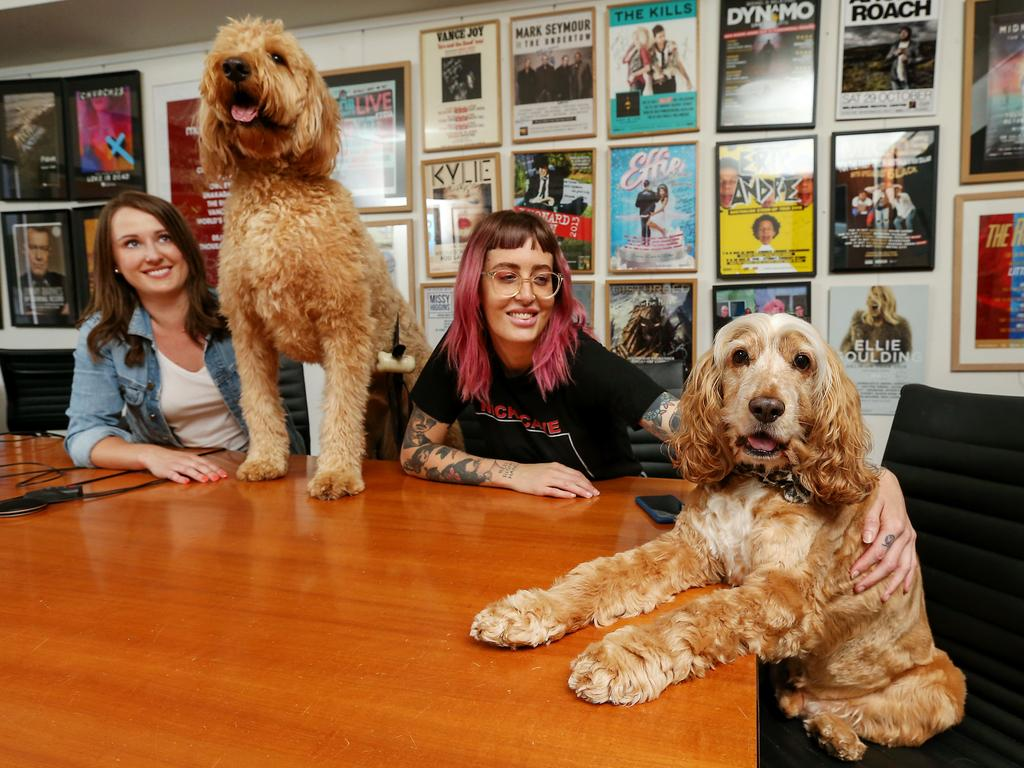 Mushroom Group entertainment agency employees Alice Mouritz with Ted and Julia Nitert with Tucker at work. Picture: Ian Currie