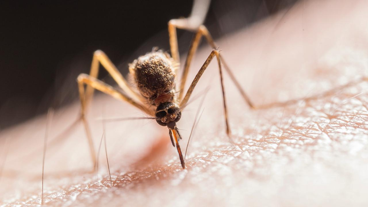 Flooding rains have turned parts of Queensland into the perfect breeding grounds for mozzies, with experts predicting a virus outbreak.