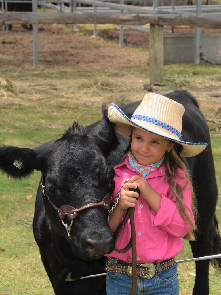 Erin Graham, 5, with her 18-month-old Lowline Angus heifer