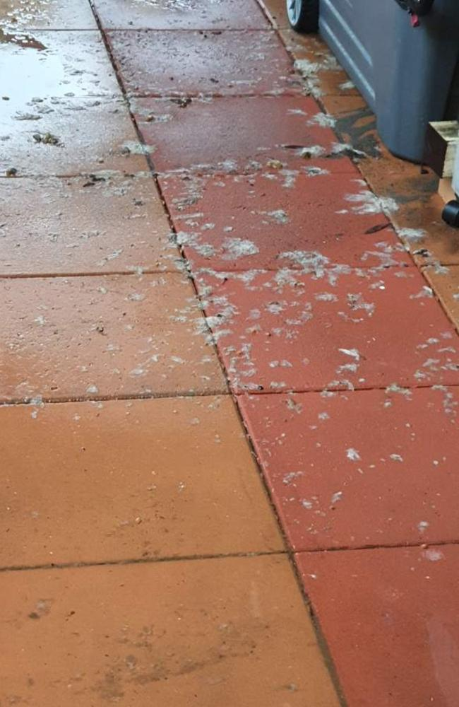 Therese Rowe said faeces and scraps of toilet paper were left everywhere. Picture: Supplied