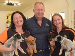 Successful charity day saves young pups