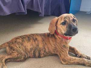 Dog carer's 'heart rips' as only 6 spots left