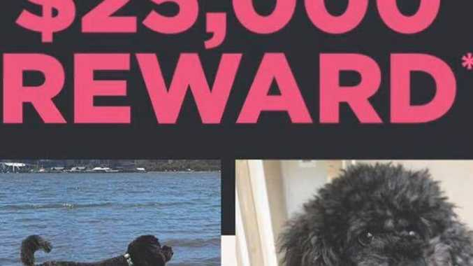 $25,000 reward on offer for missing dog