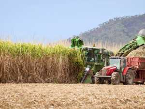 Capacity for growth in Mackay agribusiness