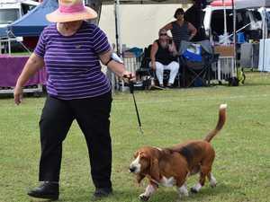 Casino Kennel Club Dog Show 2020