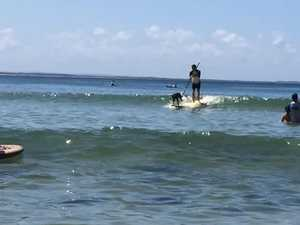 Surfing Dogs Championship 2
