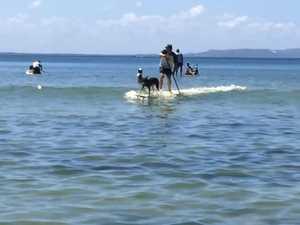 Surfing Dog Championship 1