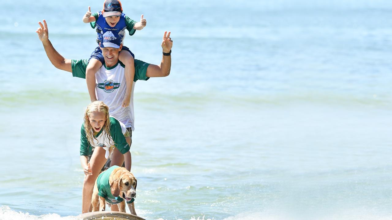 The dogs ruled the waves at the Noosa Festival of Surfing over the weekend. Photo Patrick Woods / Sunshine Coast Daily.