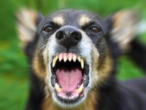 Man allegedly ordered dog to attack