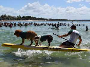HUGE GALLERY: Surfing Dog Championship