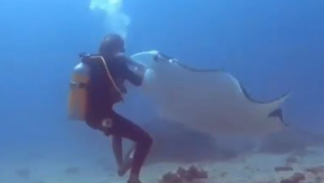 TO THE RESCUE: Matt Boyd and Dee Cooper capture dive instructor Andy Lomakin helping a manta ray entangled in fishing line.