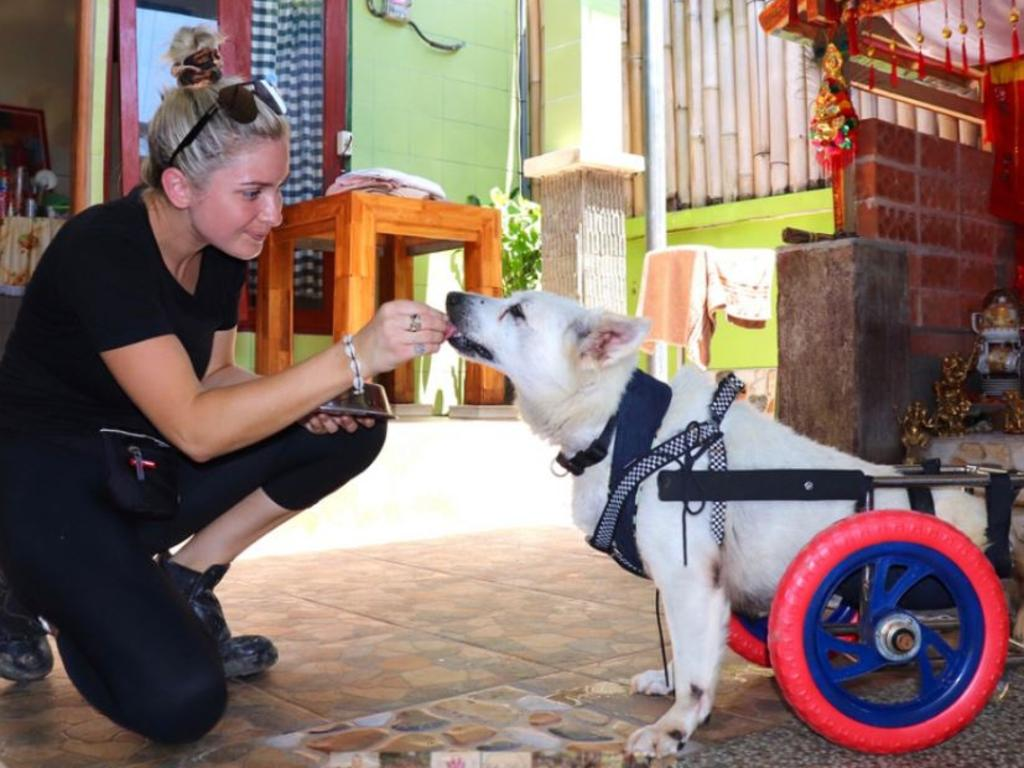 Taylor Wheeler started the Pink Paws program to help train dogs and to education children on dog safety. Picture: Supplied