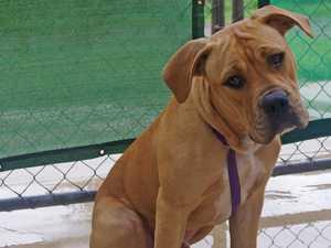 Help this hound dog find a home