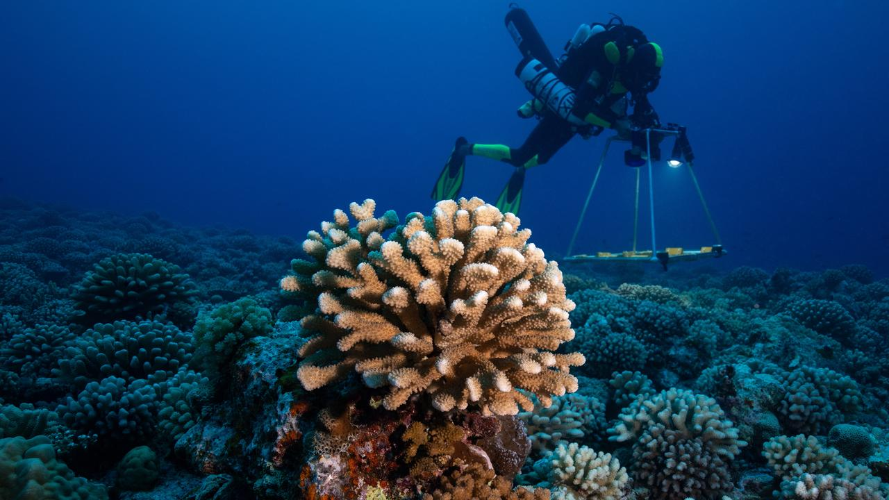 Deep-ocean corals were the subject of research on the expedition. Photo: Franck Gazzola