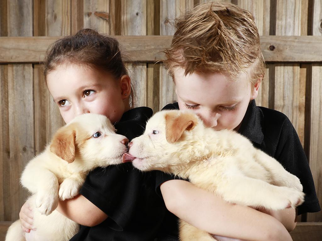 Zara, 3, and Liam Nixon, 6, with puppies at Collie & Co, Samford Village. Picture: Claudia Baxter/AAP
