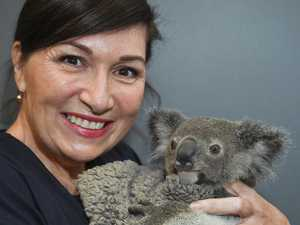 Koalas won't stop you creating fire breaks, minister says