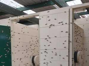BIZARRE: Masses of moths around the South Burnett