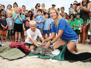 Rehabilitated sea turtles returned to the Kingscliff ocean