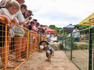 PHOTOS: Gin Gin pig races prove a hit
